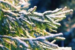 关闭圣诞树早午餐 库存图片