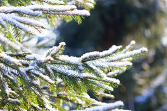 关闭圣诞树早午餐 免版税库存图片
