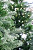 关闭圣诞树 免版税图库摄影