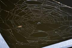 关闭在一个黑暗的湖的一个杂乱蜘蛛网 免版税库存图片