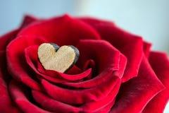 关闭在一朵红色玫瑰的瓣的中小木心脏 M 图库摄影