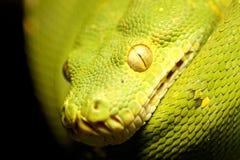 关闭在一条翠青蛇 免版税库存图片