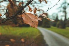 关闭在一棵树的橙色叶子与路在焦点外面 图库摄影