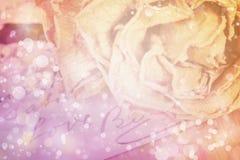 关闭在卡片写的干燥玫瑰色和爱词 柔光 免版税库存照片