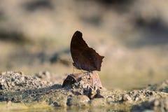 关闭在土壤的butterflie 图库摄影