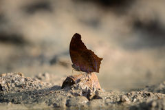 关闭在土壤的butterflie 免版税图库摄影
