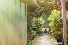关闭在地面,选择聚焦上的一只猫 库存图片