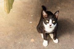 关闭在地面,选择聚焦上的一只猫 免版税图库摄影