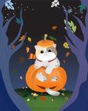 关闭在坐在愉快的橙色南瓜里面的围巾的灰色毛茸的猫 免版税图库摄影