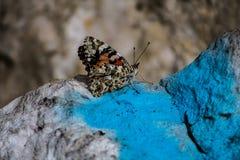 关闭在基于岩石的一只美丽的蝴蝶 库存图片