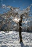 关闭在多雪的被盖的裸体树在蓝天的朱利安阿尔卑斯在冬天季节 免版税库存图片