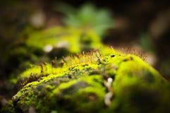 关闭在岩石的泥炭藓绿色在Ratchaprapa水坝在Khao Sok国家公园 素叻他尼,泰国 库存图片