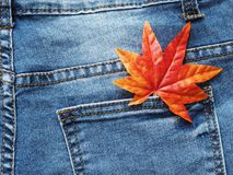 关闭在斜纹布口袋的枫叶 免版税图库摄影