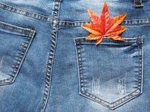 关闭在斜纹布口袋的枫叶 图库摄影