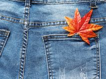 关闭在斜纹布口袋的枫叶 免版税库存图片