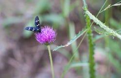 关闭在春天花的美好的蝴蝶着陆 库存照片