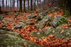 关闭在有岩石的秋天森林有很多青苔和五颜六色的落叶在地面上 免版税库存图片