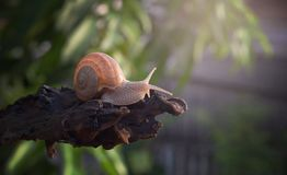 关闭在木材的一只蜗牛 库存照片
