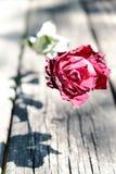 关闭在木头的干红色玫瑰 库存图片