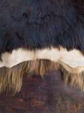 关闭在木b的黑,白色和棕色皮肤的山羊毛皮 库存照片