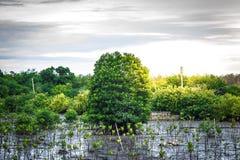 关闭在树模糊的bokeh背景的绿色叶子在森林叶子庭院里在一个领域的与叶子 使用墙纸或backgrou 免版税库存图片