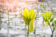 关闭在树模糊的bokeh背景的绿色叶子在森林叶子庭院里在一个领域的与叶子 使用墙纸或backgrou 免版税库存照片