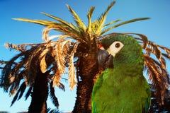 关闭在树的绿色鹦鹉 库存照片