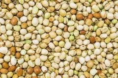 关闭在桌上的美丽,五颜六色的干扁豆 免版税库存图片