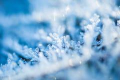 关闭在植物的霜 图库摄影
