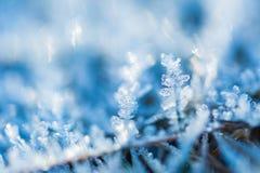关闭在植物的霜 库存图片