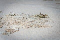 关闭在沙子海滩的一个鬼魂螃蟹 库存图片