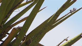 关闭在沙漠盖几乎每棵植物的脊椎 免版税图库摄影