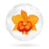 关闭在泡影的唯一明亮的橙色兰花在白色背景 免版税库存照片