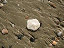 关闭在海滩的美好的白色沙钱 图库摄影
