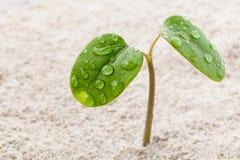 关闭在生长在春天的年幼植物的雨珠 库存照片