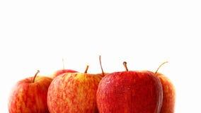 关闭在白色背景的新鲜的红色苹果与拷贝空间 库存图片