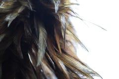 关闭在白色背景的羽毛笤帚 免版税图库摄影