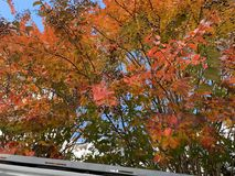 关闭在秋天的绿色,黄色,红色和桃红色树 库存照片