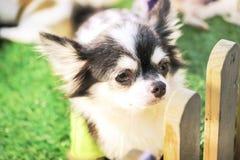 关闭在笼子的逗人喜爱的小狗 免版税库存图片