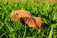 关闭在绿草的唯一叶子 免版税图库摄影