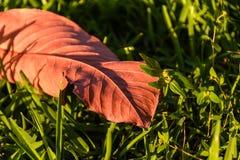 关闭在绿草的唯一叶子 免版税库存照片