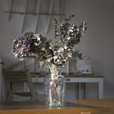 关闭在花瓶的干燥五颜六色的八仙花属花 库存图片