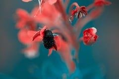 关闭在花的棕色甲虫,宏指令 库存照片