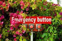 关闭在花的紧急按钮 在灌木的三个红色按钮 在花的紧急状态 免版税库存图片