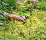关闭在花的蝴蝶-弄脏花背景 免版税库存图片