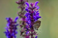 关闭在花的蝴蝶-弄脏花背景 免版税图库摄影