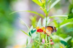 关闭在花的蝴蝶 免版税库存图片