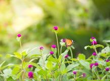 关闭在花的蝴蝶 免版税库存照片
