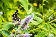 关闭在花-迷离花背景的蝴蝶 库存图片