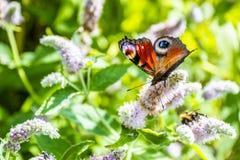 关闭在花-迷离花背景的蝴蝶 免版税库存图片